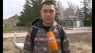 Не так давно в Казахстане появился синтетический наркотик, называемый «спайсом»