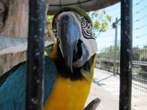 Parrot Tongue Up Close
