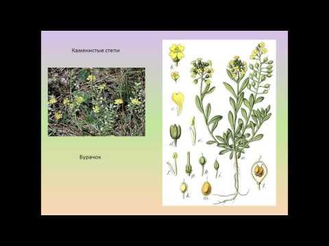 Растения лесостепи и степи Красноярского края