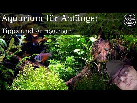 Aquarium für Anfänger und Einsteiger, Tipps und Anregungen.