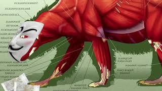 Анатомия самого сильного снюсоеда (познавательное видео)
