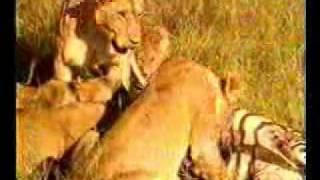 عالم الحيوان الاصلي بتااع زمااااااااان الجزء الثاني