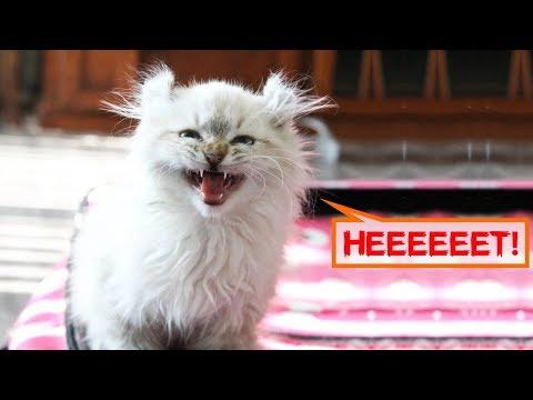 Вопрос: Как успокоить чересчур активного котёнка?