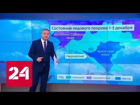 """""""Погода 24"""": белые медведи заполонили Чукотку - Россия 24"""