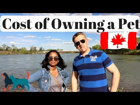 Cost Of Owning A Pet In Canada | All You Need To Know About Pets