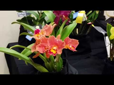 New Hampshire Orchid Show (Raw Footage), 2018...