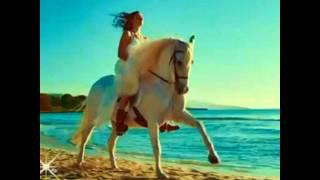 Самые красивые фото про лошадей!!!!!!🐴🐴🐴🐴🐴