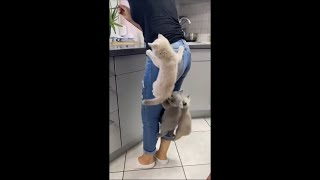 Kittens Climb Their Mom as They Couldn't Wait for Food