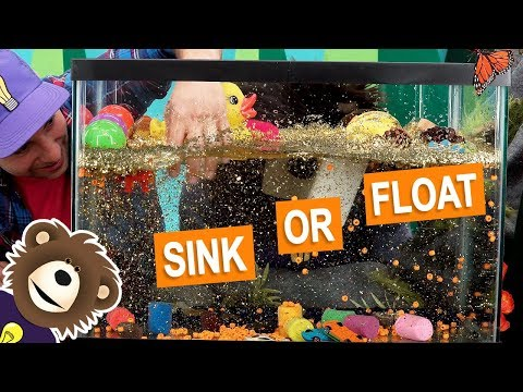 Sink Or Float | Fun Science Experiment For Kids