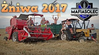 Żniwa 2017 ☆ Massey Ferguson 86 & Ursus c360 3p ☆ Godzinny Vlog GoPro #54 ㋡ Bronczek, MrAdamo15