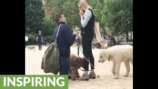 Watch This Guy Propose In The Middle Of A Dog Park!