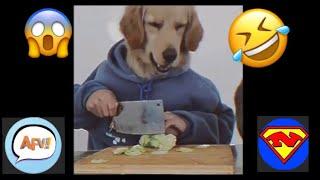 Funny fails 2020, приколы 2020 лучшие до слез,  komik videolar, смешарики, Funny fails,