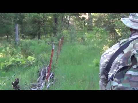 Hog Hunting With Full Auto 223 Machine Gun