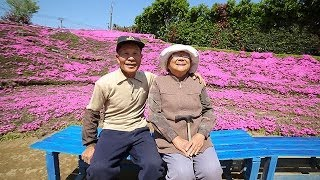 光失った妻に芝桜を 宮崎 thumbnail
