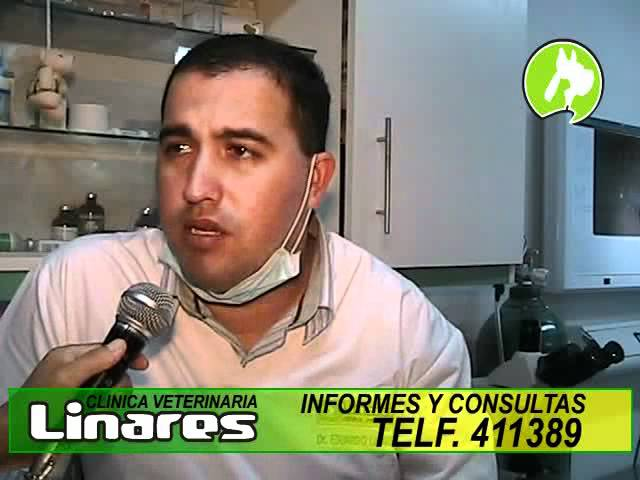 Clinica Veterinaria Linares Anestesia Inhalatoria Travel Video