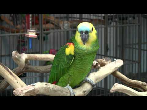 Parrot Cages & Parrot Accessories for Sale from Cage World