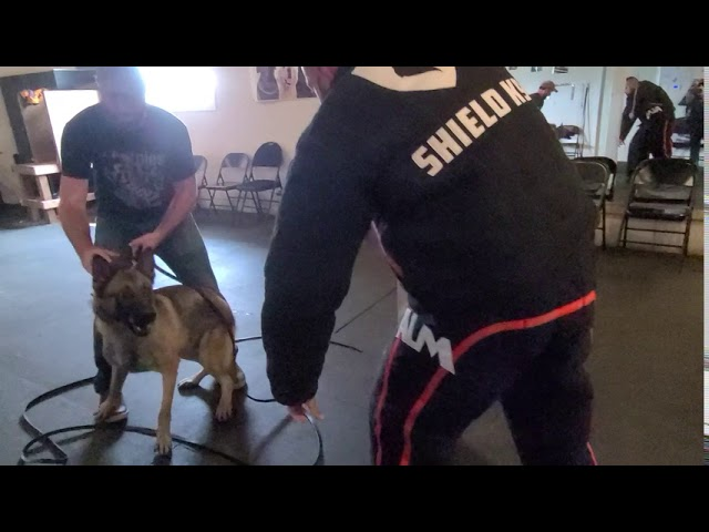 How to K9 Protection Training - Grips and Targeting