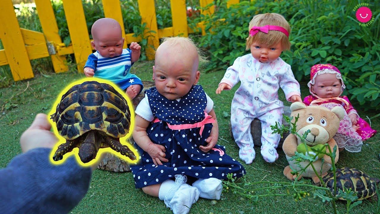 Adoptamos TORTUGAS Los bebés  Ben, Lindea, Neala y Darwin juegan y aprenden