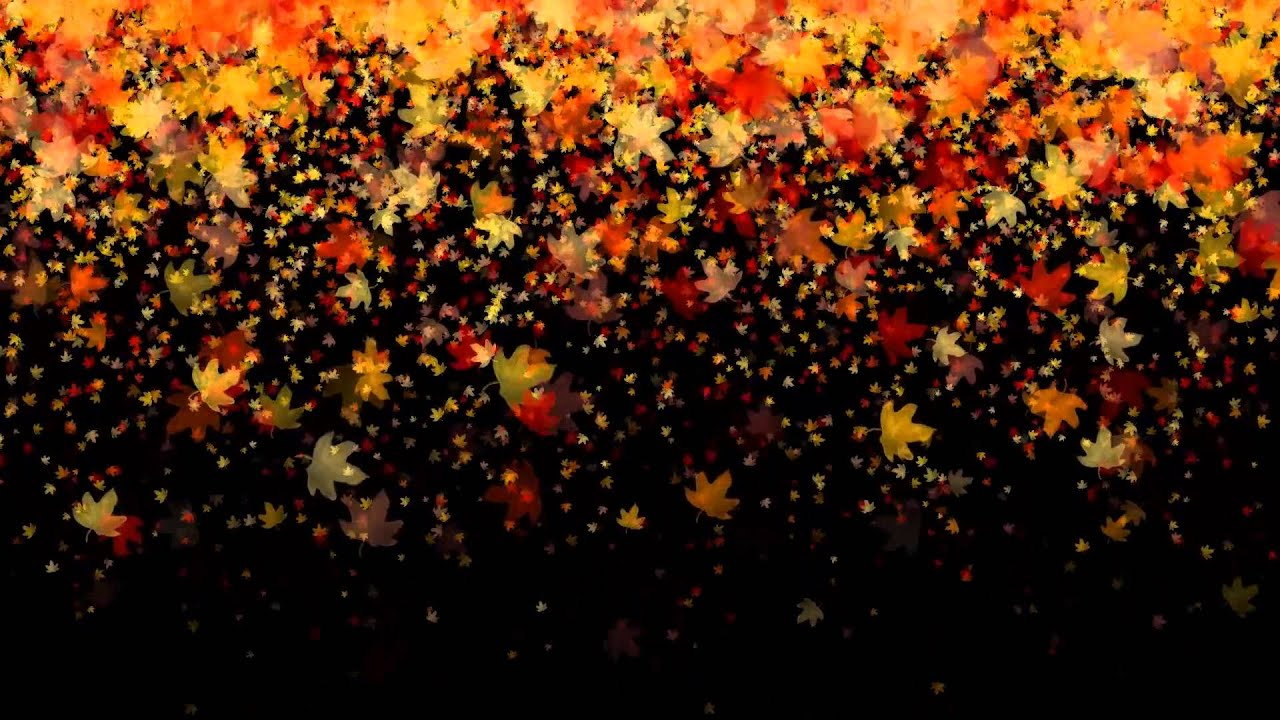 Leaves Wallpaper Fall Leaves Falling Royalty Free Effect Video Footage Vfx