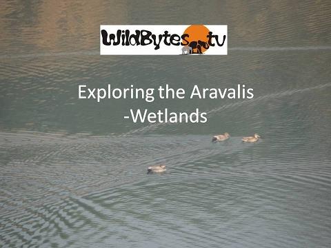 Exploring the Aravalis-Wetlands