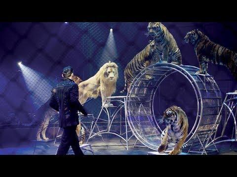 Ein besonderes Jubiläum – Circus Probst gastiert in Zwickau
