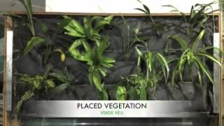 Diy indoor vertical green wall made with a bamboo frame, acrylic water recirculating trough and hydroponic irrigation.you can easily create your own g...