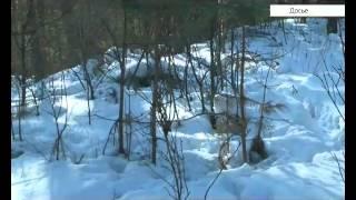 Охоту на снегоходах предлагают запретить(, 2016-02-10T08:22:25.000Z)