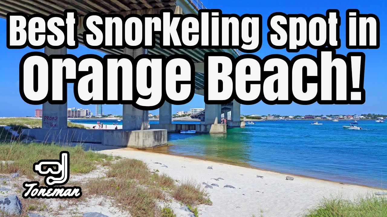 Best Snorkeling Spot in Orange Beach Alabama!