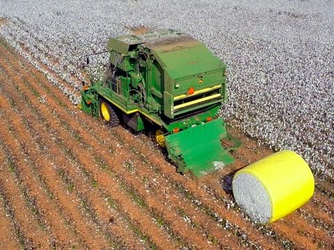 Cotton Harvesting in North Alabama