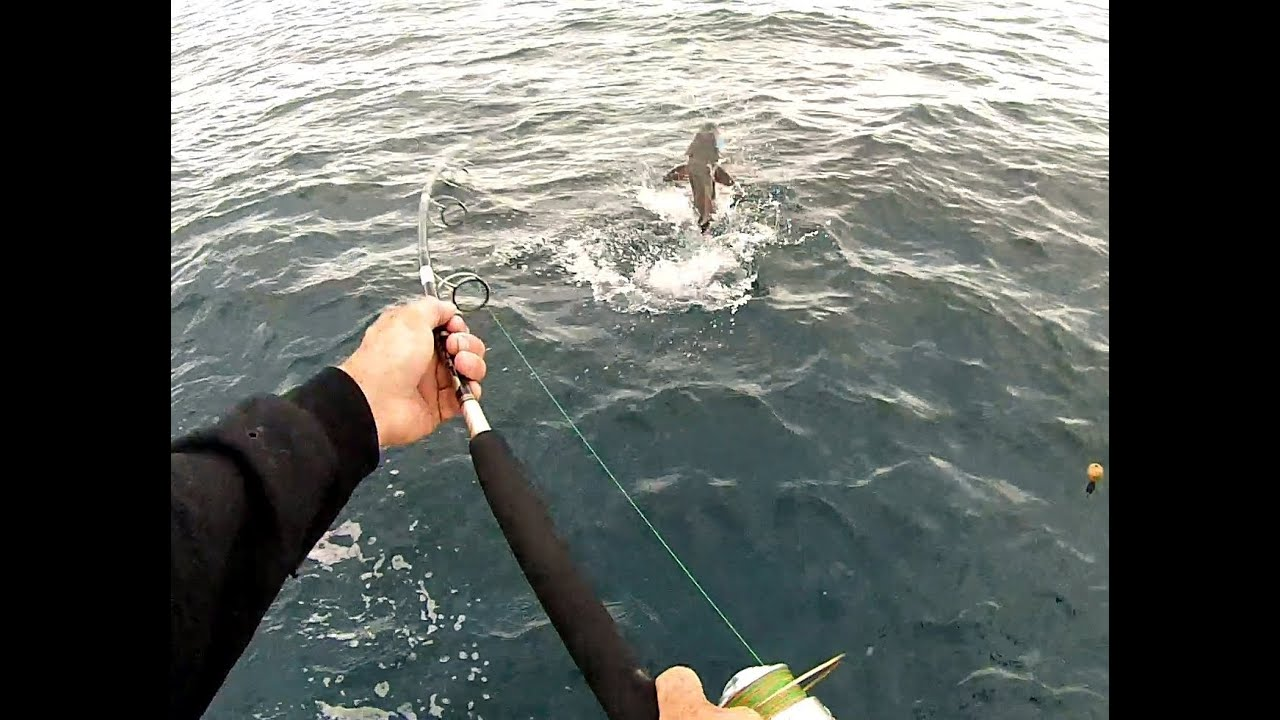 Cobia Fishing: Vertical Jigging in 150ft of water ...