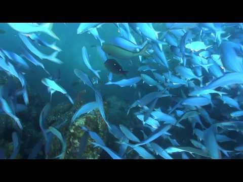 Wettie TV- Summer Time Spearfishing At The Mokahinau Islands