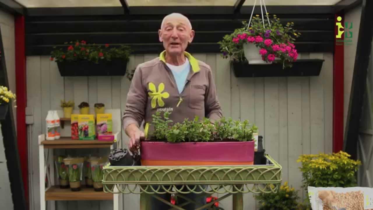 Hoe pot ik mijn planten op door intratuin amsterdam youtube for Intratuin amsterdam