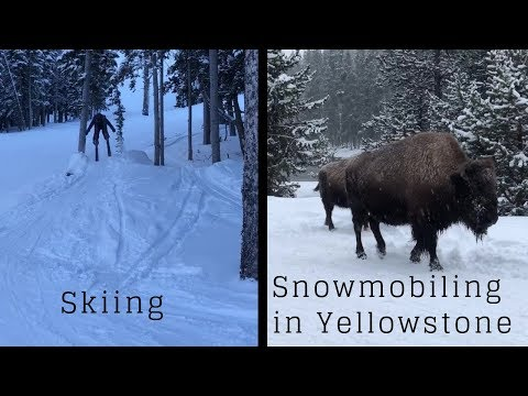 Skiing in the Mountains of Montana & Snowmobiling in Yellowstone (Bison & Old Faithful!)