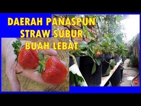 TERBAIK! WA/CALL 0857-3131-8535 Jual Segala Peralatan Hidroponik Malang from YouTube · Duration:  20 seconds
