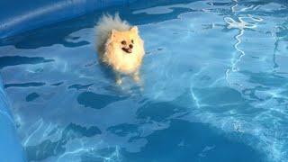 처음 수영하러간 강아지…