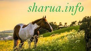 Sharua.info (шаруа инфо) - сайт бесплатных объявлений продажи скота и домашних животных в Казахстане