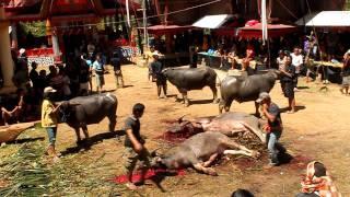 Tana Toraja funeral of Mr Josef Tappang Lamba: 17 of 18