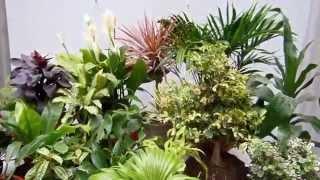 20 plantas de interior