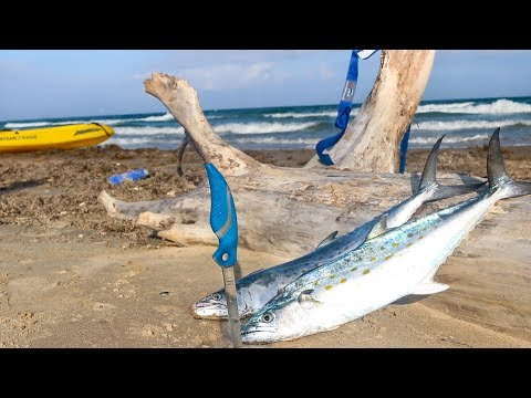 surf fishing for food to cook on the beach  CATCH AND COOK