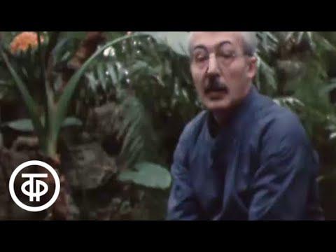 Кино нашего детства (1986)