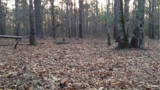 5 Min turkey Hunt In Georgia
