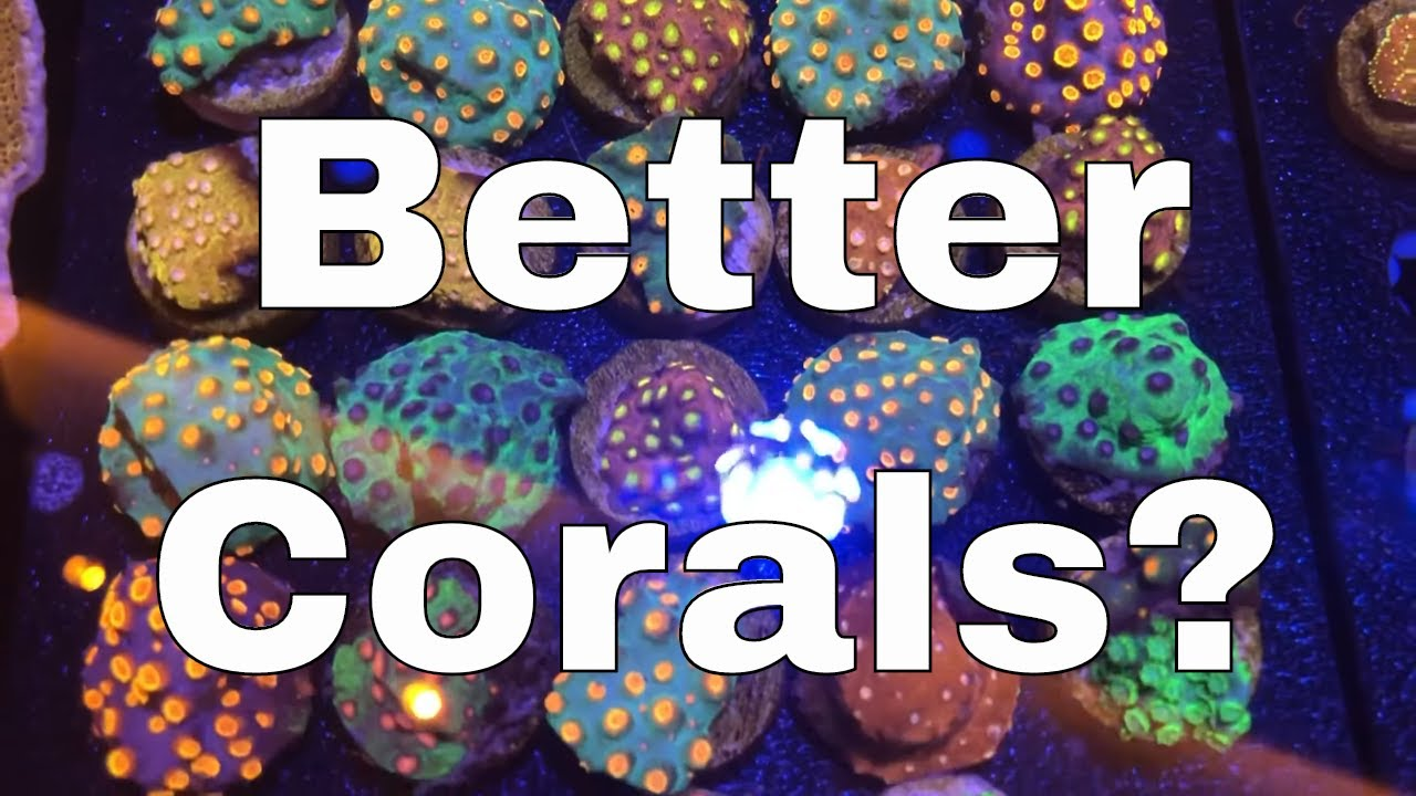 Want Healthier, Faster Growing, More Colourful Corals?  | Red Sea Reefer XL 425 Build
