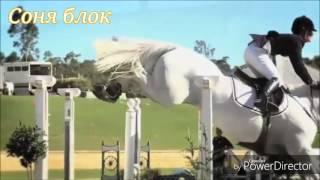 А мой смысал жизни это - конный спорт - лошади