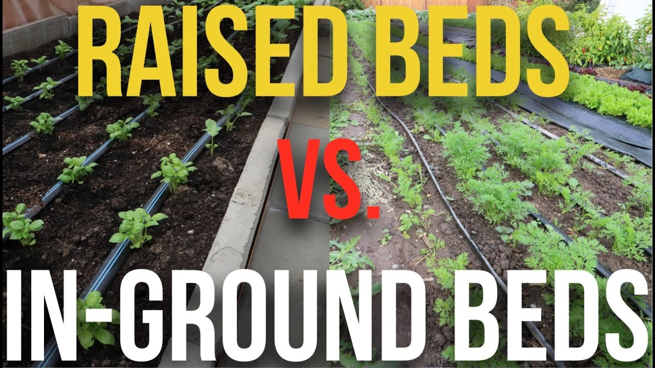 Raised Beds Vs In Ground Beds   YouTube
