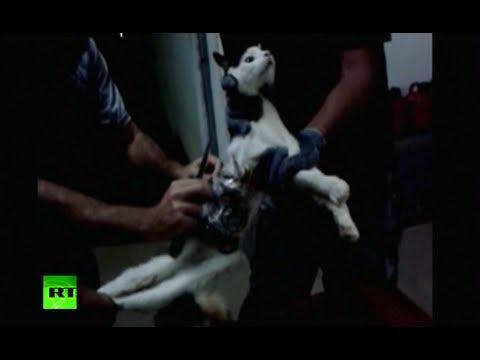 Video: 'Prison break' cat caught in Brazil