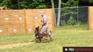 A Military Dog And His Handler