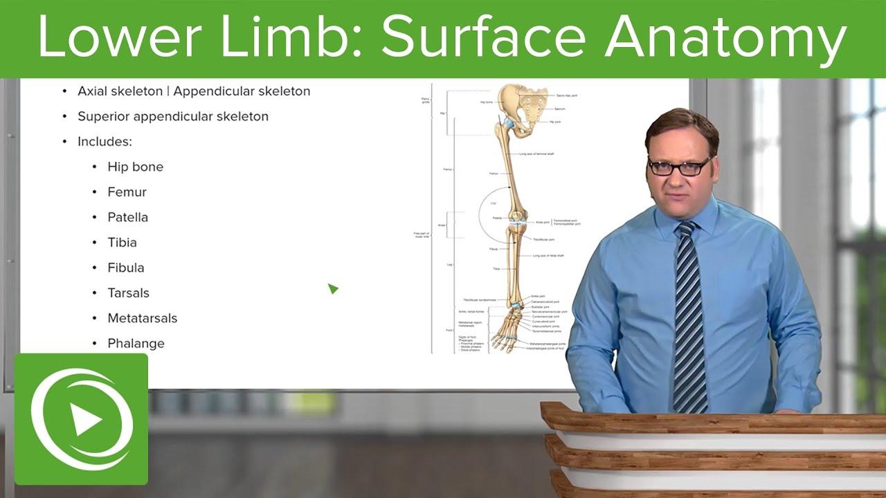 Download Lower Limb: Surface Anatomy & Osteology – Anatomy | Lecturio