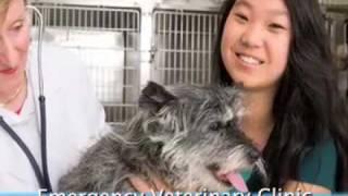 Emergency Veterinary Clinic  Yorktown, VA