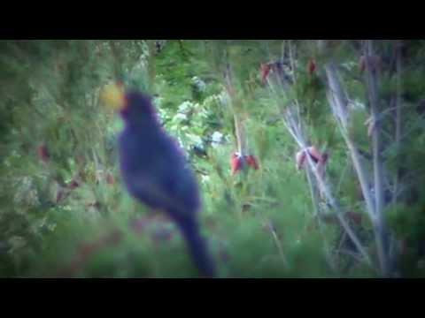 Cvrkut ptice