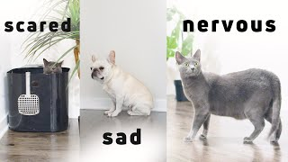 Moving with Cats and dog  How to deal with moving anxiety
